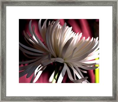 Blanche 94 Framed Print by Gilda Pontbriand