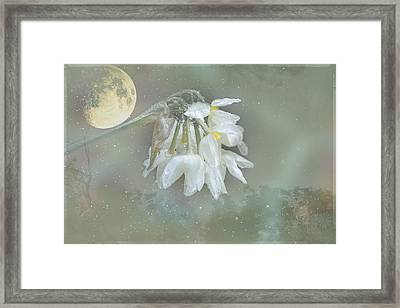 Framed Print featuring the photograph Blanche by Elaine Teague
