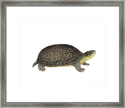 Blandings Turtle Framed Print