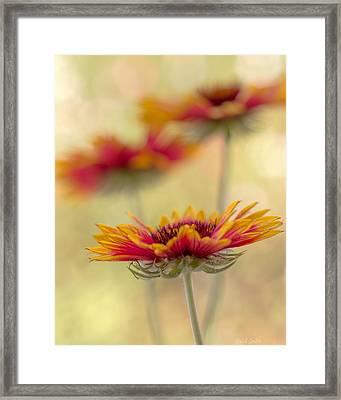 Blanket Flower Whimsy Framed Print by Heidi Smith