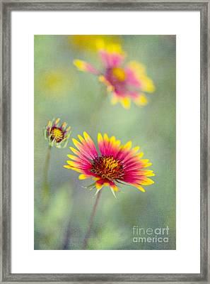 Blanket Flowers Framed Print by Elena Nosyreva