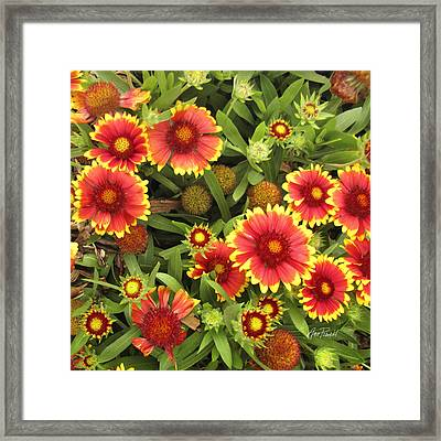 Blanket Flowers  One - Photography Framed Print by Ann Powell