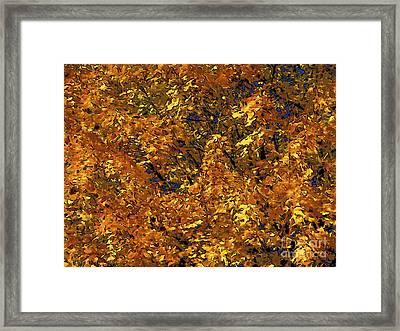 Blast Of Autumn Framed Print