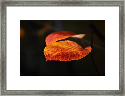 Blatt Framed Print