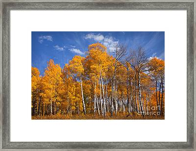 Blaze Framed Print by Aaron Whittemore