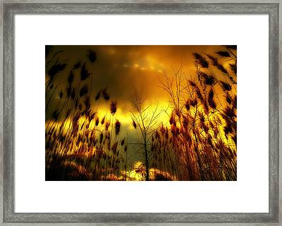 A Blaze Of Gold In Nature Framed Print by Gothicrow Images