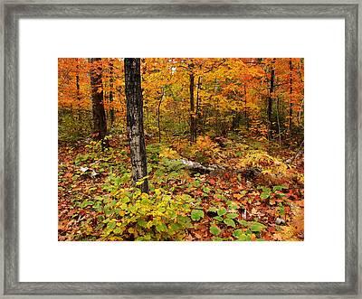 Blazing Forest Framed Print