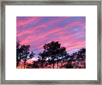 Blazing Pines Framed Print by Joy Hardee