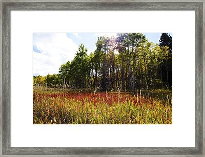 Blazing Red Grass In Colorado Framed Print