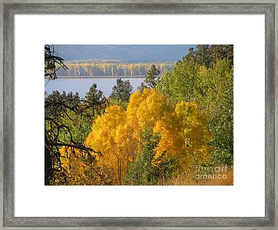 Blazing Yellow Framed Print