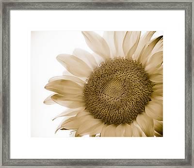 Bleached Sunflower Framed Print