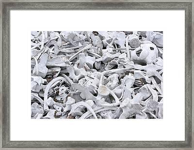 Bleached Whale Bones Framed Print by Dr P. Marazzi