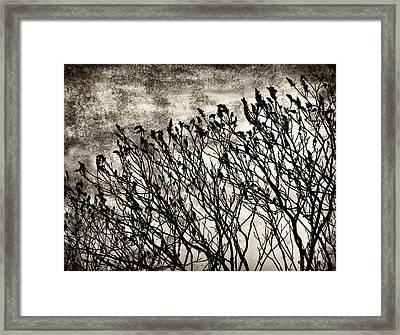 Bleak View Framed Print