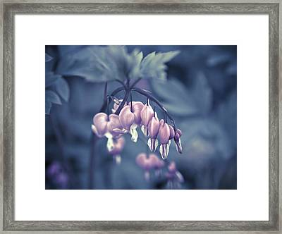 Bleeding Heart Flower Framed Print by Frank Tschakert