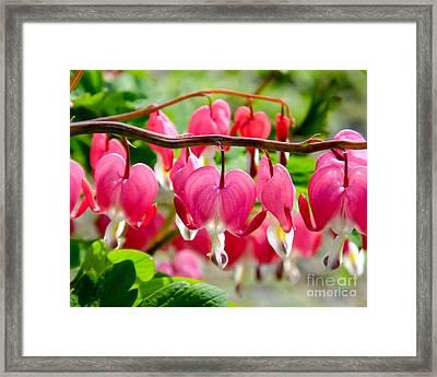 Framed Print featuring the photograph Bleeding Heart Flowers by Kristen Fox