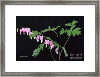 Framed Print featuring the photograph Bleeding Hearts 2 by Jeannie Rhode