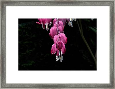 Framed Print featuring the photograph Bleeding Hearts by Leif Sohlman