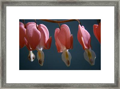 Bleeding Hearts Framed Print by Retro Images Archive