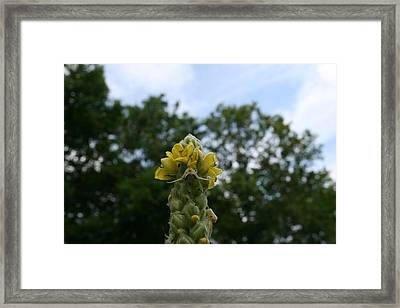 Framed Print featuring the photograph Blended Golden Rod Crab Spider On Mullein Flower by Neal Eslinger