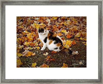 Blending Framed Print by Christy Ricafrente