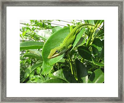 Framed Print featuring the photograph Blending In by Beth Vincent