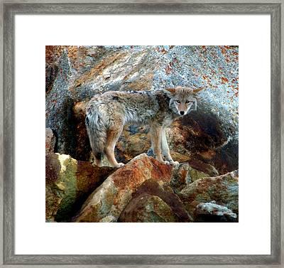 Blending In Nature Framed Print