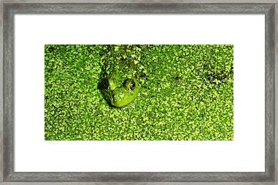Blending Framed Print by Jeff Klingler