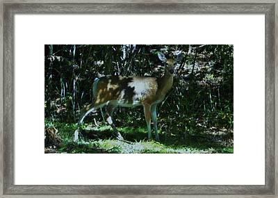 Blending With The Forest Framed Print