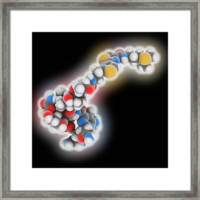 Bleomycin Drug Molecule Framed Print