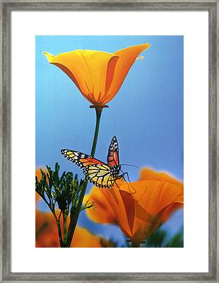 Blessed By The Sun Framed Print by Evie Cook