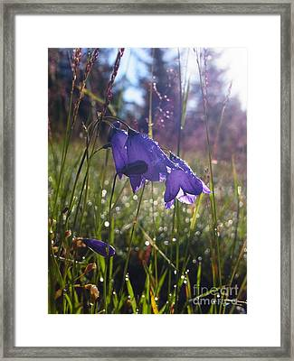Framed Print featuring the photograph Blessing Of A New Day by Agnieszka Ledwon