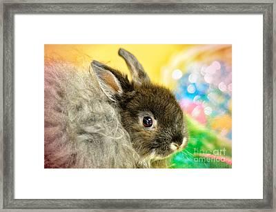 Blessings Framed Print by Lois Bryan