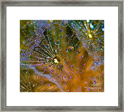 Bling Framed Print by Mitch Shindelbower