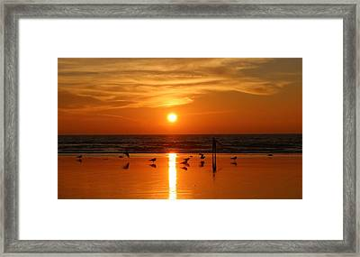 Bliss At Sunset   Framed Print