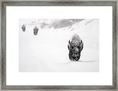 The Boys Of Winter Framed Print by Sandy Sisti