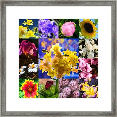 Blocks Of Blooms Framed Print by Jo-Anne Gazo-McKim