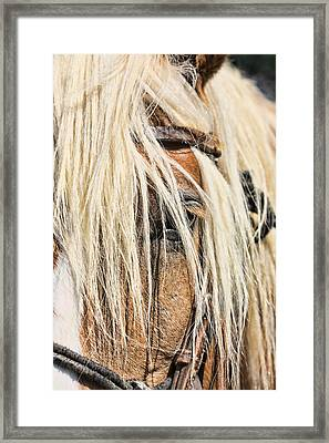 Blond Horse Framed Print by Gregory Scott