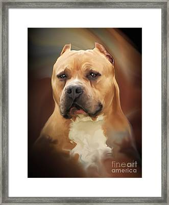 Blond Pit Bull By Spano Framed Print by Michael Spano