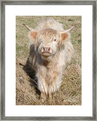 Blonde Highlander Framed Print