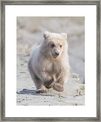 Blondes Have More Fun Framed Print by Chris Scroggins