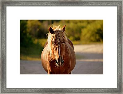Framed Print featuring the photograph Blondie by Amanda Vouglas