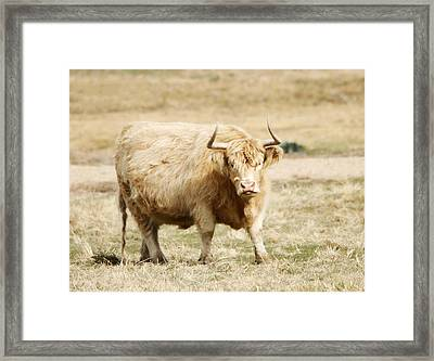 Blondie Framed Print by Marilyn Hunt