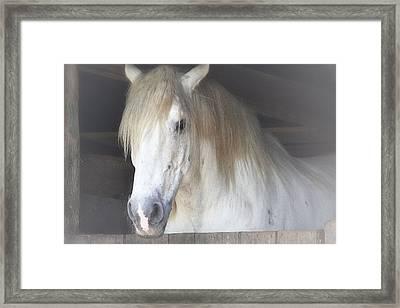 Blondie Framed Print by Nadalyn Larsen