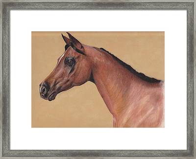 Blood Arabian Queen Framed Print