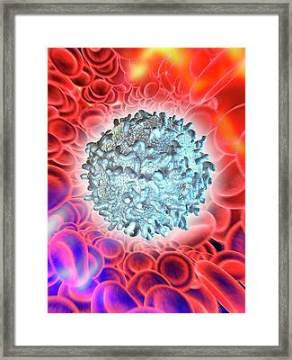 Blood Cells Framed Print