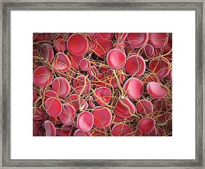 Blood Clot Framed Print by Maurizio De Angelis