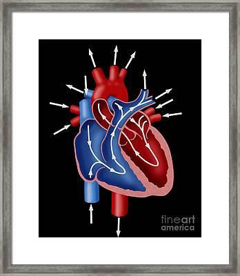 Blood Flow Diagram Framed Print
