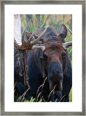 Framed Print featuring the photograph Blood In His Eye by Jim Garrison