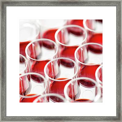 Blood In Multiwell Tray Framed Print