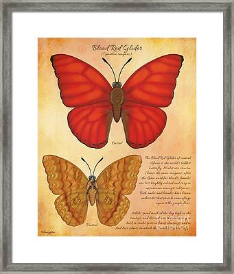 Blood Red Glider Butterfly Framed Print by Tammy Yee